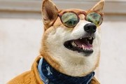 The Most Fashionable Pets On Instagram