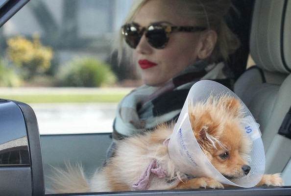 Gwen Stefani, Her Cute Dog, and Her Gorgeous Family