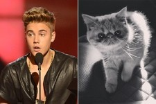 Justin Bieber Has Been Hanging Out With a Persian Kitten