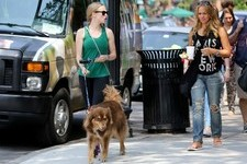 Amanda Seyfried Steps Out with Her Pooch