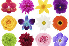 How Many Different Kinds of Flowers Can You Name?