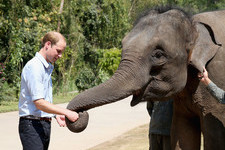 Prince William Has a New Elephant BFF